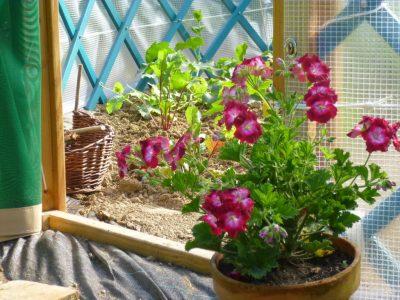 Un pot de fleurs à l'entrée de la serre-yourte, pour attirer les bûtineurs