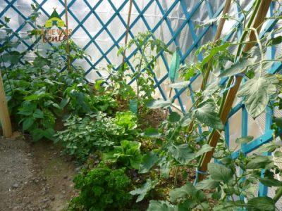 au bout de quelques semaines les plants sont bien installés