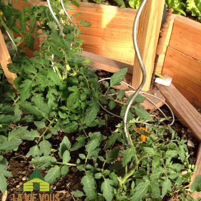 les plants de tomates au centre de la serre